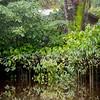 Floresta Inundada: Tiassui River