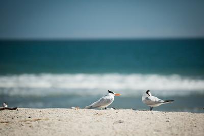 20140314_Amelia Island_002