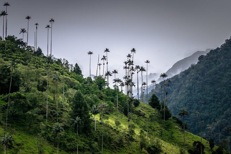 Cocora valley, Quindio