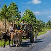 Cuban ox-Cart