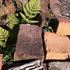 volunteer fern breaking through the bricks