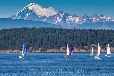AYC Sailboat Race, Fidalgo Bay, Anacortes, WA.