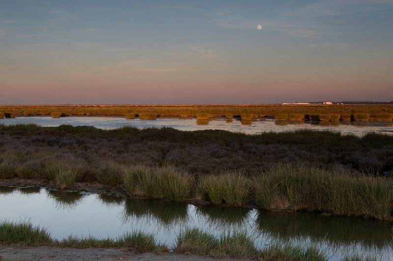 Moonrise in the saltmarsh