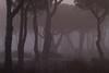 Doñana al amanecer