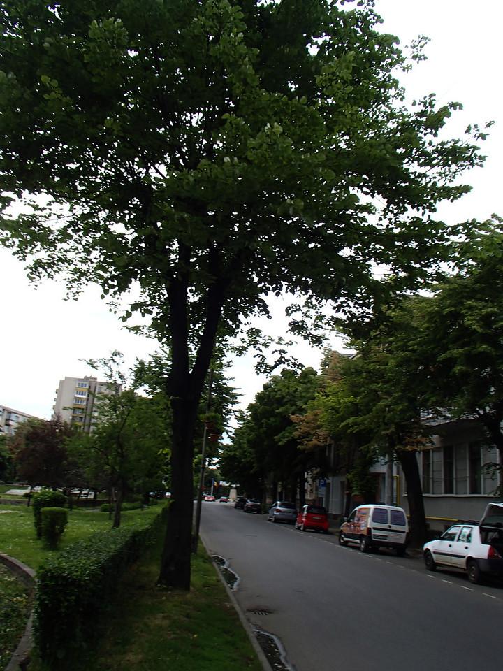0121 Szatmar Strade repulicii