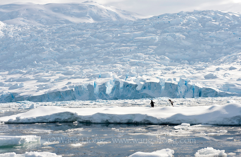 Penguins on floating ice,