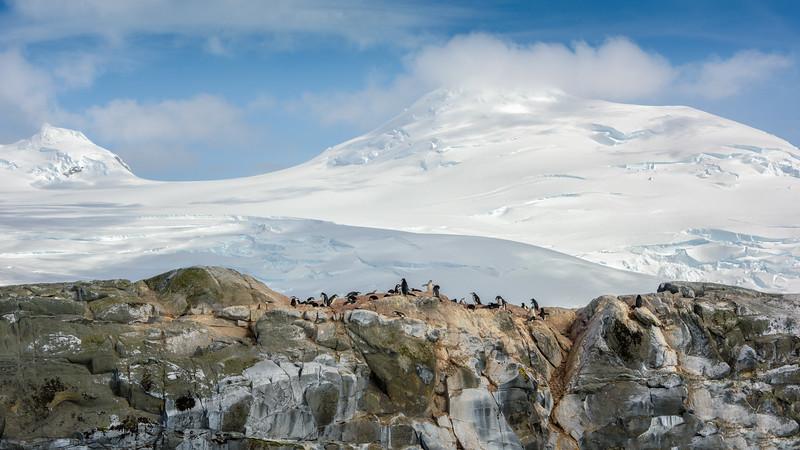 Hydrudga Rocks, land of penguins