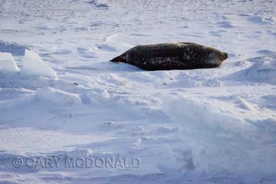 Antarctica Only wildlife I saw in Antarctica