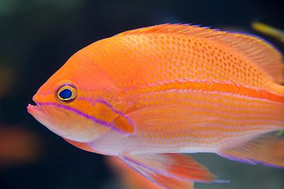 Aquarium-0626