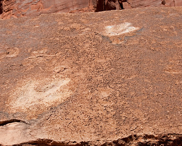 Dinosaur tracks near Arches National park, UT