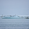 Bylot island