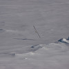 Northern Fulmar over sea ice