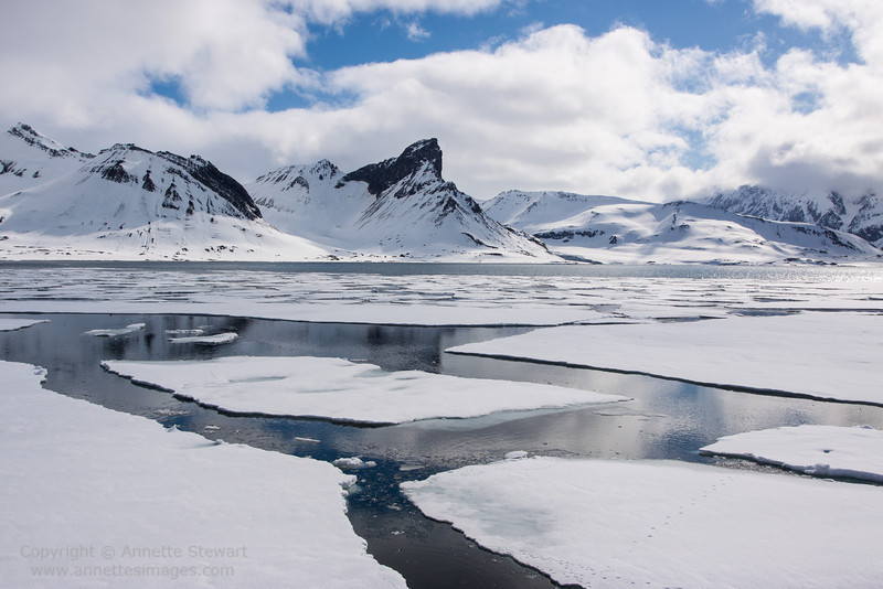 Polar Bear prints on sea ice, Hornsund