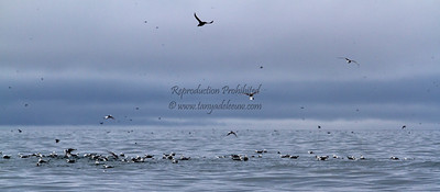 More about Coburg Island here: http://tanyadeleeuwphotography.blogspot.ca/2012/09/coburg-island.html