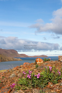 More about Etah here: http://tanyadeleeuwphotography.blogspot.ca/2012/11/on-to-greenland.html