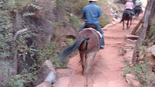 Video: Mule Ride Up North Kaibab Trail