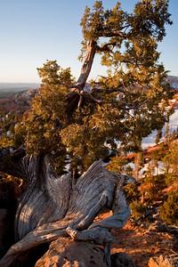 Arm Rest Bryce Canyon National Park, Utah 2010