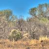County Park, Tumacaori, AZ