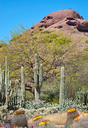 Nature of Arizona