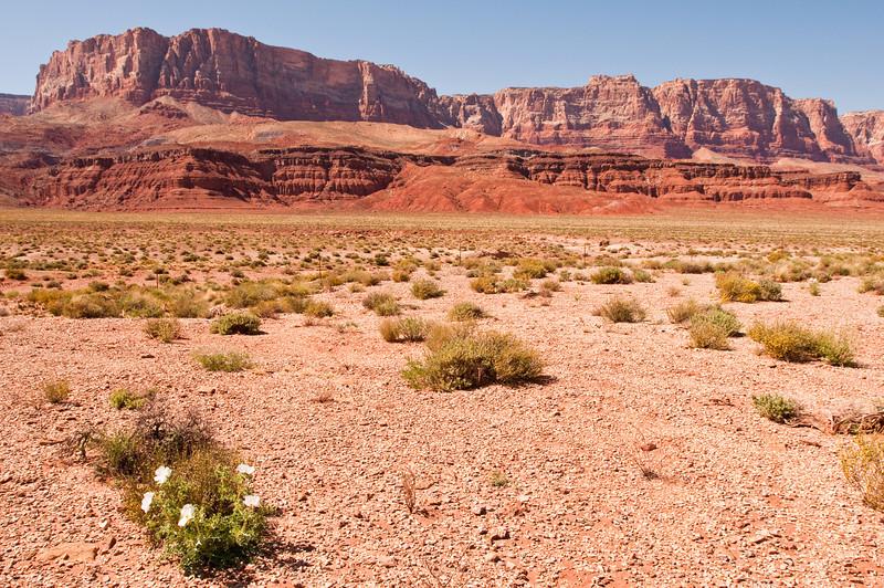 Lonely Flowers<br /> Vermillion Cliffs, Arizona<br /> 2010
