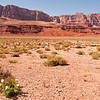 Lonely Flowers<br /> Vermillion Cliffs, Arizona<br /> 2010