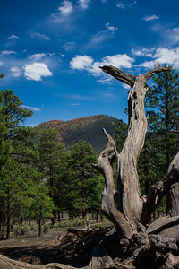 Dead tree at Crater Mountain in Arizona