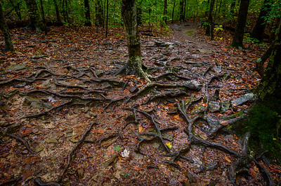 Whitaker Point Trail-1853-HDR