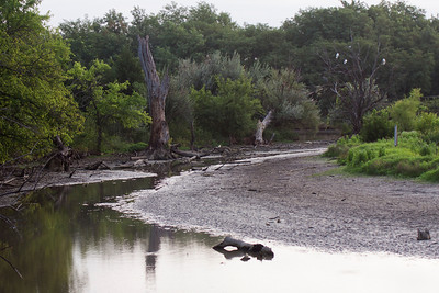Chisholm Creek in the Dry