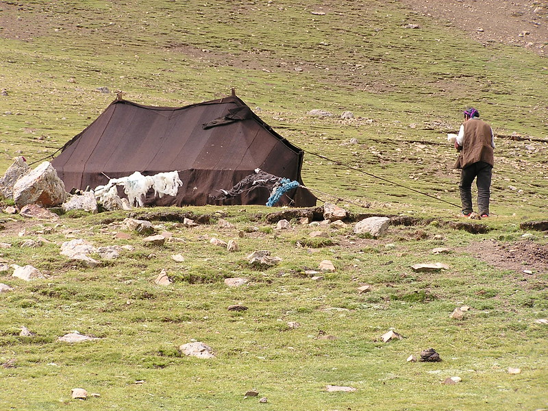 216 yak hair tent