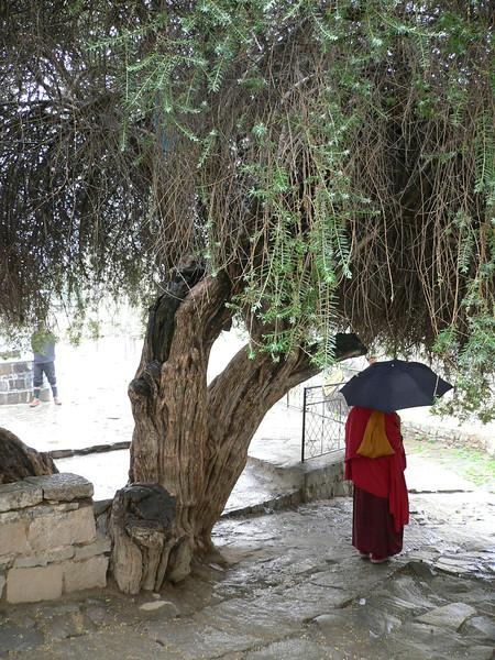 142 monk