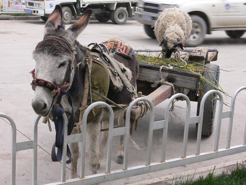 153 donkey