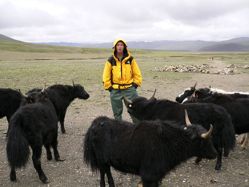 195 man among yaks
