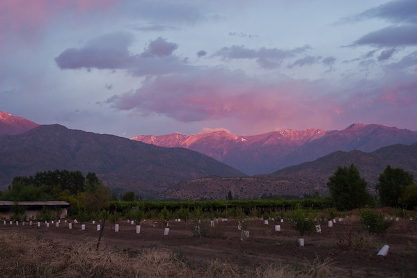 """Sunset on the Andes looking east from Casa San Regis outside San Estaban in the Aconcagua Valley. Newly planted peach trees in the foreground. See: <a href=""""http://www.casasanregis.cl/2008/"""">http://www.casasanregis.cl/2008/</a>"""