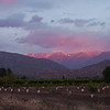 "Sunset on the Andes looking east from Casa San Regis outside San Estaban in the Aconcagua Valley. Newly planted peach trees in the foreground. See: <a href=""http://www.casasanregis.cl/2008/"">http://www.casasanregis.cl/2008/</a>"