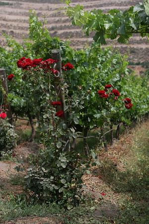 Vina Von Siebenthal in the Aconcagua Valley. See:http://www.vinavonsiebenthal.com/en/