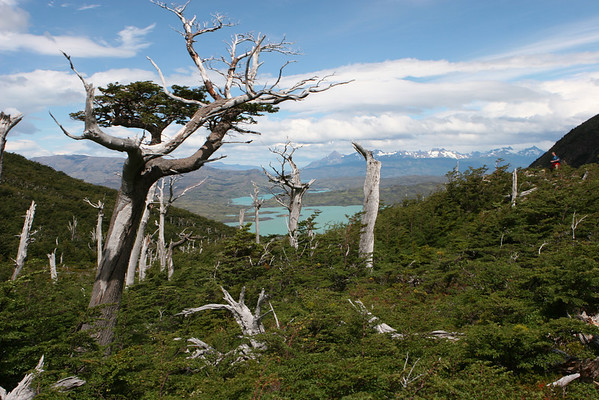 Torres del Paine National Park, Chile<br /> view from Valle del Francés to Lake Nordenskjol and Lake Pehoe