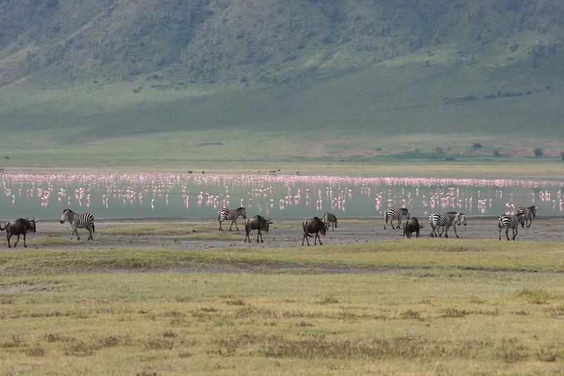 Tanzania, Serengeti, migration, Zephyr Adventures, Lake Manyara, Ngorongoro Crater