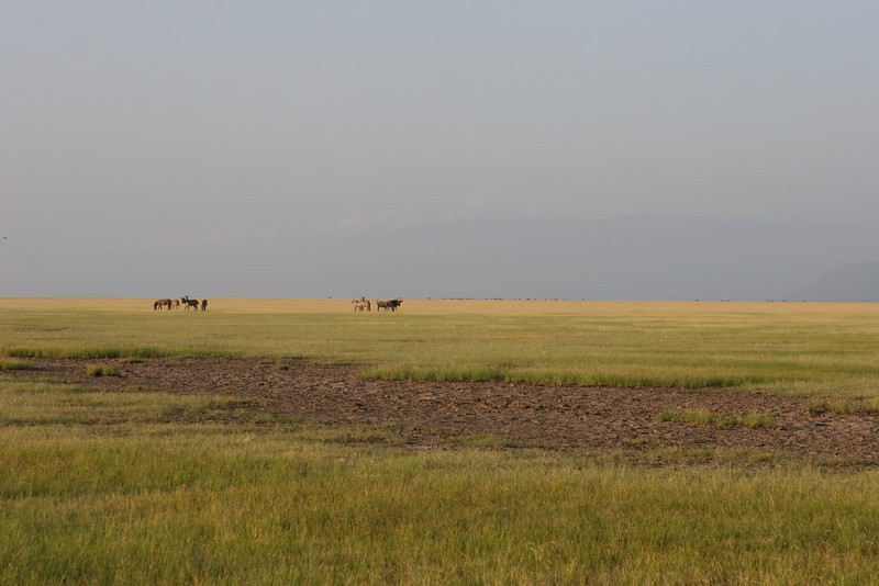 The plains east of the Migunga Forest Camp and Lake Manyara National Park.