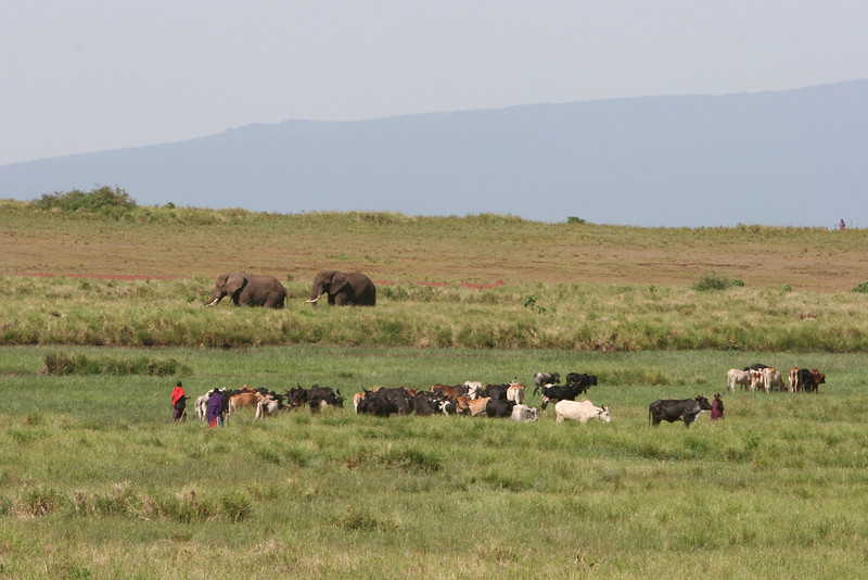 Along route b-144, southwest of the Ngorongoro Crater just over the edge above the elephants.