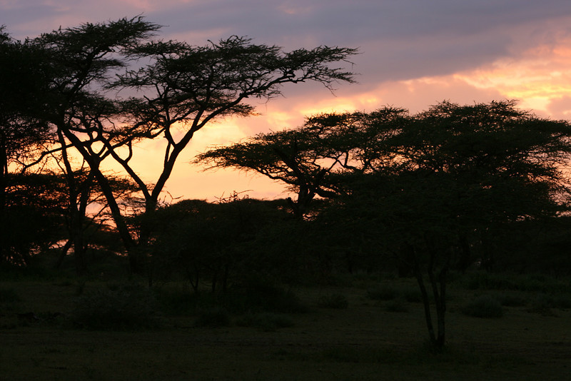 Sun rise through the Acacia.