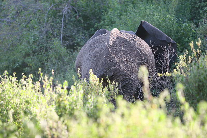 Elephant at  Lake Manyara National Park.