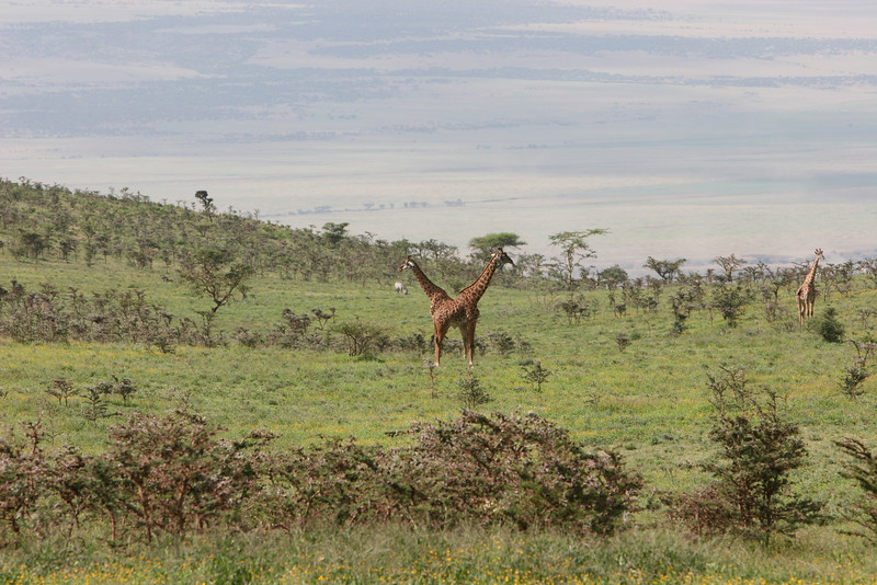 Heading down to the Serengeti National Park below in the distance.