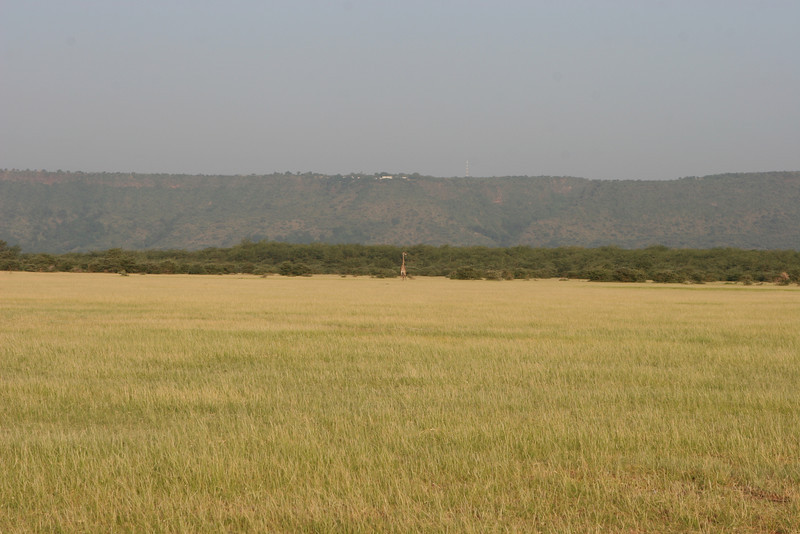 The plains east of the Migunga Forest Camp and Lake Manyara National Park. Looking west towards Lake Manyara and the Manyara Escarpment on the edge of the Rift Valley. Lone giraffe standing guard for any lions emerging from the tree line. Elegant Lake Manyara Serena Lodge on the tops of the the escarpment.