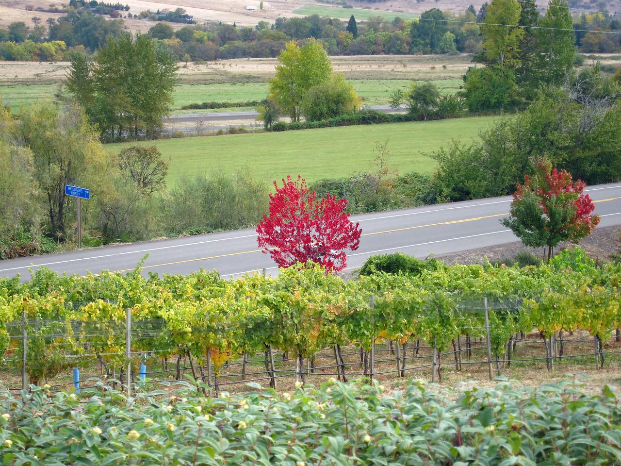 2194 Weisinger Winery Ashland OR