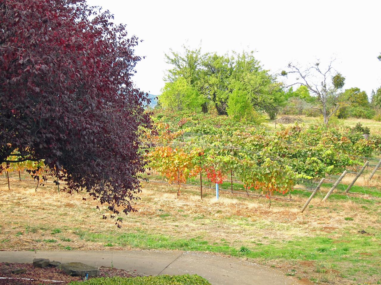 2207 Weisinger Winery Ashland OR