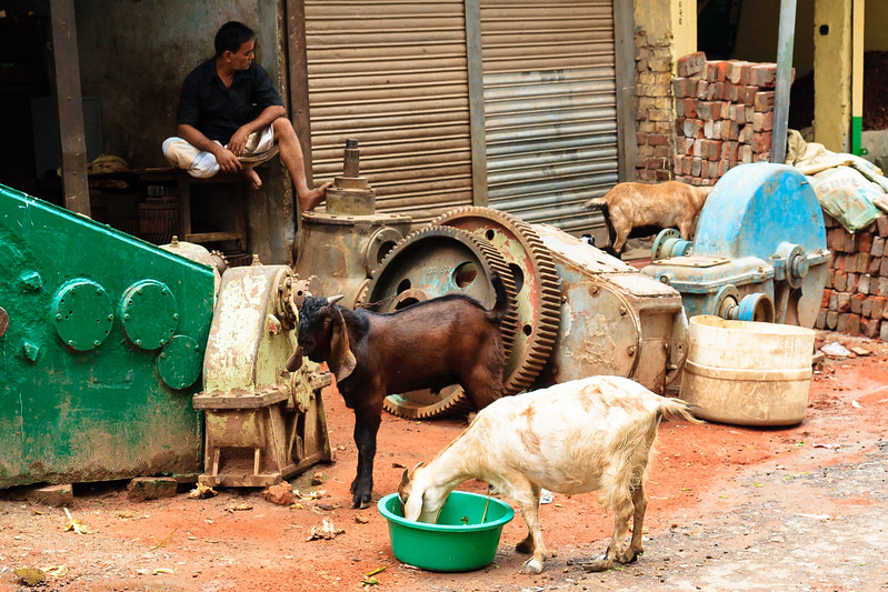 08IB862 Bangladesh Dhaka Farmer Goats Workshop Men