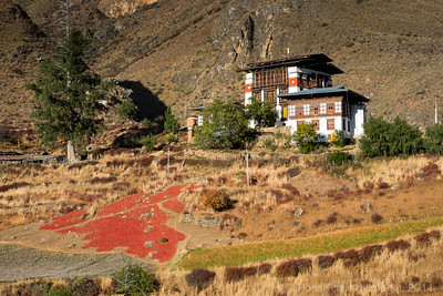 Traditional farmhouse with red chillies drying in the field