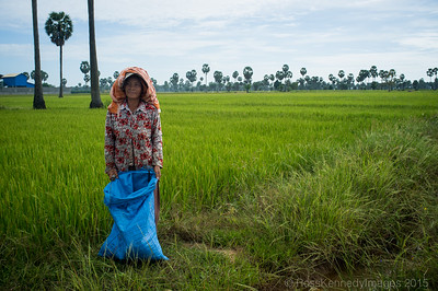 Rice Farmer outside Phnom Penh