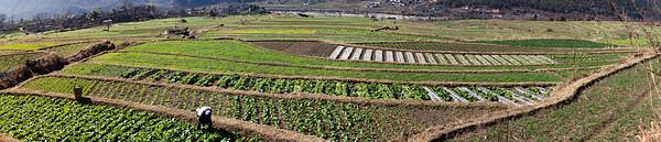 Terraced Fields, Yangtse River, North West Yunnan