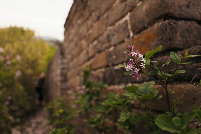 Wild Flowers, Wild Wall